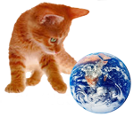 orange kitten playing with Earth